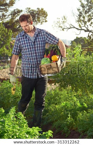 Farmer pruning and tending to his organic sustainable vegetable patch while holding a crate of fresh produce - stock photo