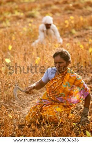Farmer's family working in the farm rural village Salunkwadi, Beed, Maharashtra, India - stock photo