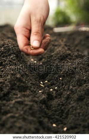 Farmer's hand planting a seeds in soil