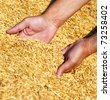 Farmer's hands keeping wheat harvest. Ukraine, East Europe. - stock photo