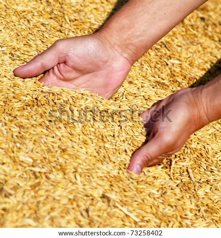 Farmer's hands keeping wheat harvest. Ukraine, East Europe. - stock photo