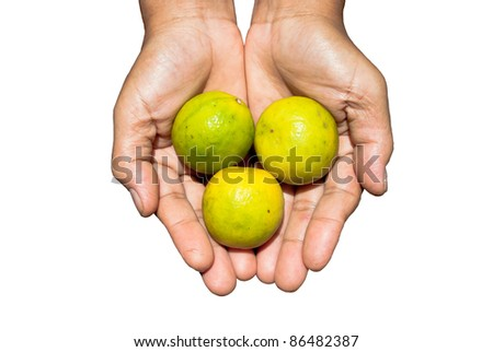 Farmer's palm with limes inside,can be use for health/wellness/world hunger related concept design. - stock photo