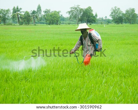 Farmer spraying pesticide in the rice field. - stock photo