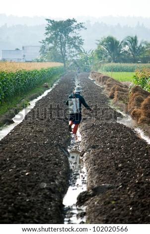 Farmer spraying pesticide on corn field - stock photo