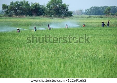 farmer spraying pesticide,thailand. - stock photo