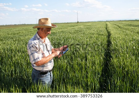 Farmer standing in a wheat field and looking at tablet - stock photo