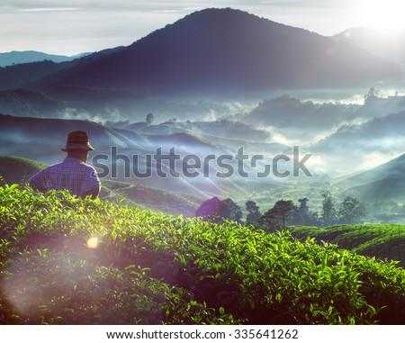Farmer Tea Plantation Malaysia Culture Occupation Concept - stock photo