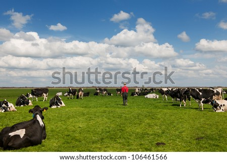 farmer walking in meadows with black and white cows - stock photo