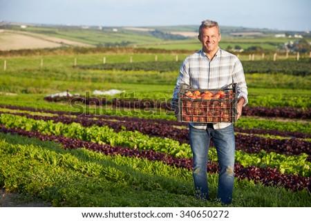 Farmer With Organic Tomato Crop On Farm - stock photo