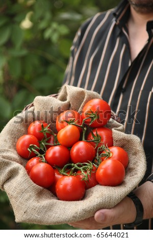 farmer with organic tomatoes - stock photo