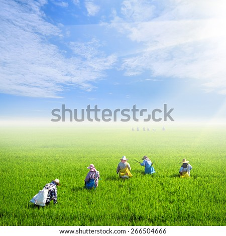 farmer work on rice field with nice sky - stock photo