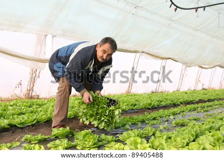 Farmer working in a greenhouse