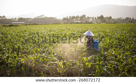 Farmer works in a paddy field - stock photo