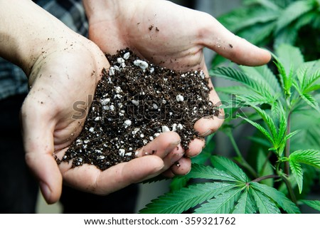 farmers holding rich soil for his marijuana plants - stock photo