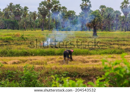 Farmers in Thailand are set fire to straw stubble in rice cultivation