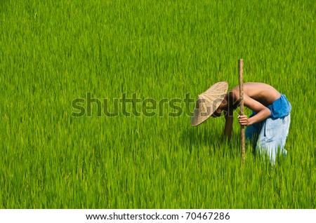 Farmers inspects his farm - stock photo