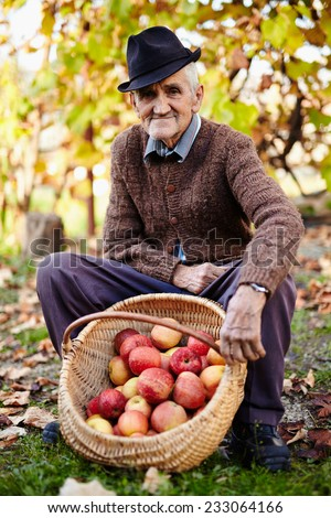 Farmers market, healthy food: senior farmer displaying organic homegrown apples in a basket - stock photo