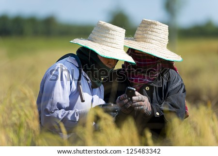 farmers on rice field with cell phone - stock photo