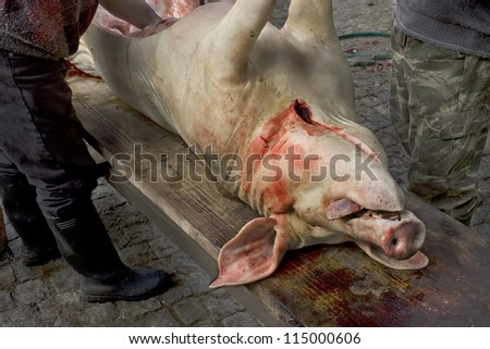 Farmers pig slaughter as result of a seasonal country tradition that soon will be lost.(More in my gallery) - stock photo