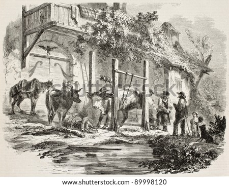 Farmers shoeing oxen old illustration. Created by De Buysson, published on L'Illustration, Journal Universel, Paris, 1858 - stock photo