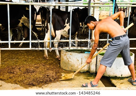 Farmers store excrement of cows to manure. - stock photo