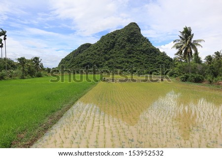 Farmers working in the rice field.