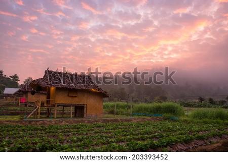 Farmhouse at dawn, fresh air, beautiful skies. - stock photo