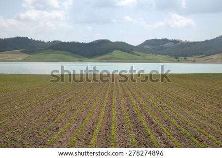 farming - stock photo