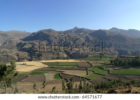Farming fields in the Colca Valley, Peru