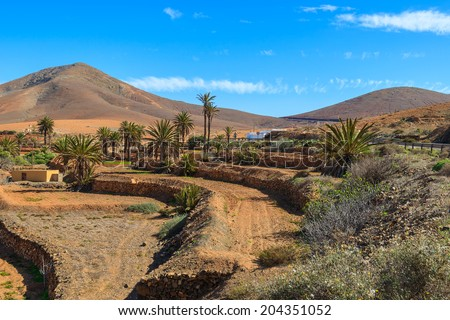 Farming fields with palm trees and view of volcanic mountains near Pajara village, Fuerteventura, Canary Islands, Spain