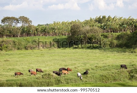 Farming landscape in Colombia - stock photo