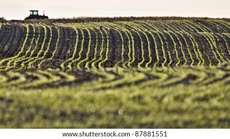 Farming Rows seeds plalnted Canada - stock photo
