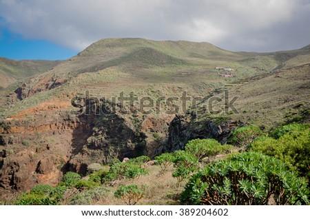 farming terraces and tabaiba (Euphorbia atropurpurea) shrubs on the slopes of cliffs in Teno Alto Teno Rural Park, Tenerife, Canary Islands, Spain - stock photo