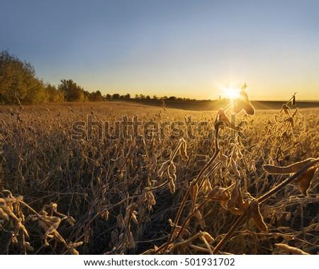 Farmland early in the autumn morning