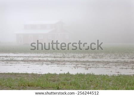 Farmland Fog. A barn and a rain soaked field on a foggy day. - stock photo