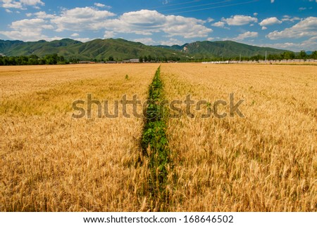 farmland in afternoon, summer, China - stock photo