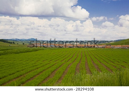 Farmland   in Asia - stock photo