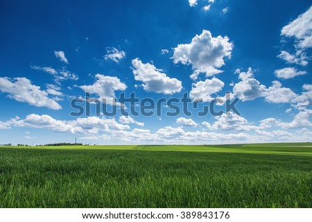 Farmland. Wheat field against blue sky with white clouds. Agriculture scene - stock photo