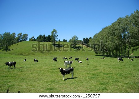Farmland with cows - stock photo