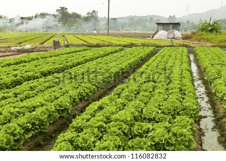 Farmland with many vegetables