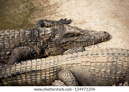 farms Crocodiles