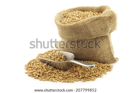 farro grain in a burlap bag with an aluminum scoop on a white background - stock photo