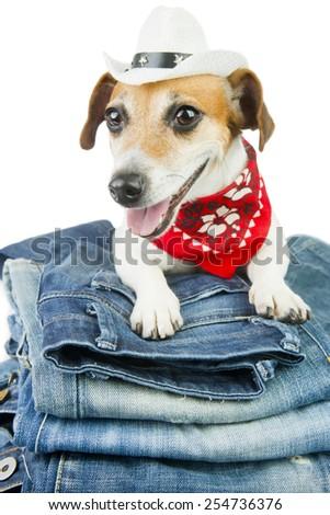 Fashion smile dog denim clothing. Cowboy hat and red bandana - stock photo