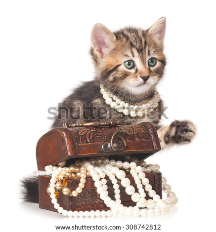 Fashionable kitten protects a wooden chest with pearls isolated on white background - stock photo