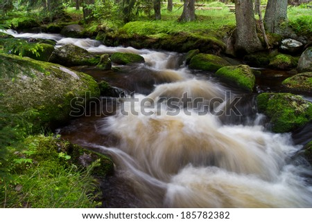 Fast stream in summer in a national park
