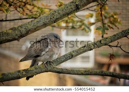 fat bird on branch in autumn season
