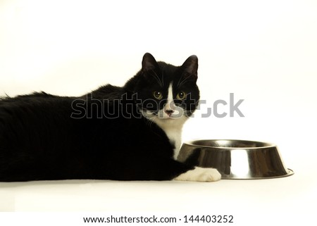 Fat cat lays in front of his empty bowl to eat more - stock photo