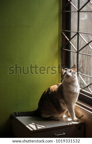 Fat cat sitting beside window with green wall in background light shade