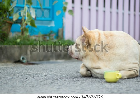 Fat dog with cup in-Thailand