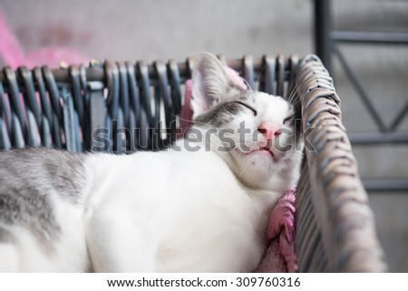 Fat Lazy Cat's sleeping in the basket with the comfy pose (Selective Focus Point) - stock photo